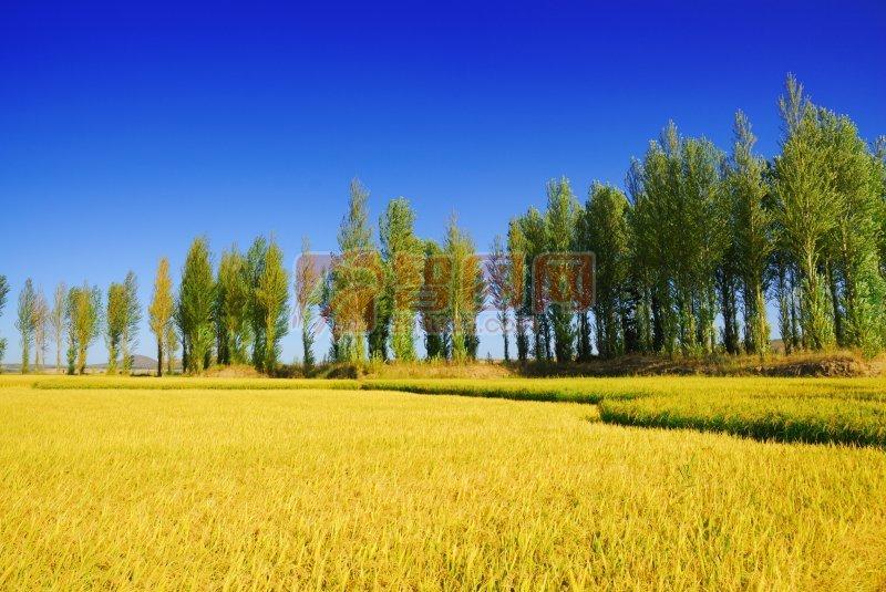 黃色草地與元素