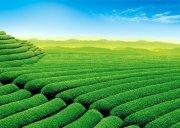 綠色植物元素