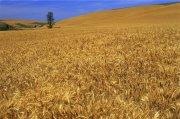 黃色草地元素