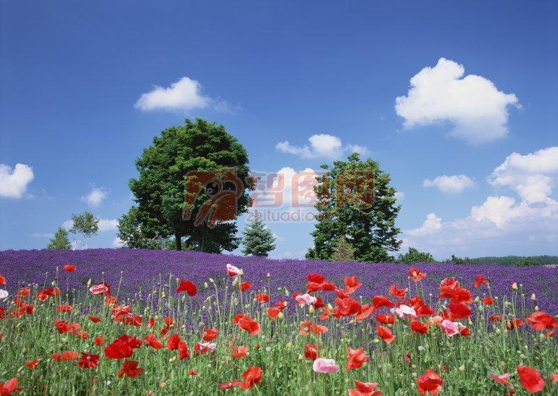 鮮花素材 風景攝影 攝影圖片下載 藍色天空 晴空意境寫意