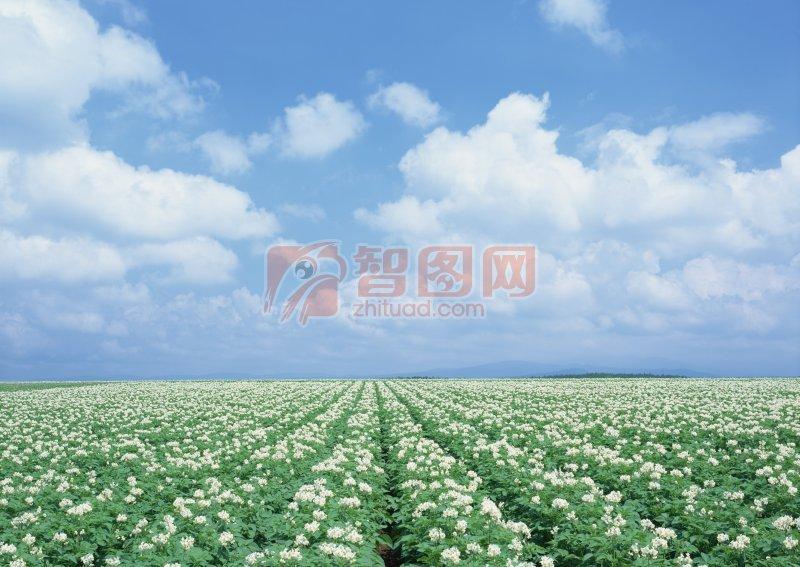 白色花海元素