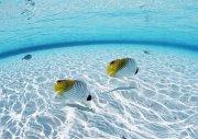 美麗海洋魚
