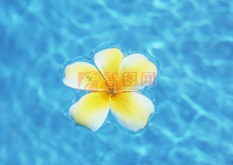 小黃花風景