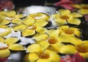 黃色花朵攝影