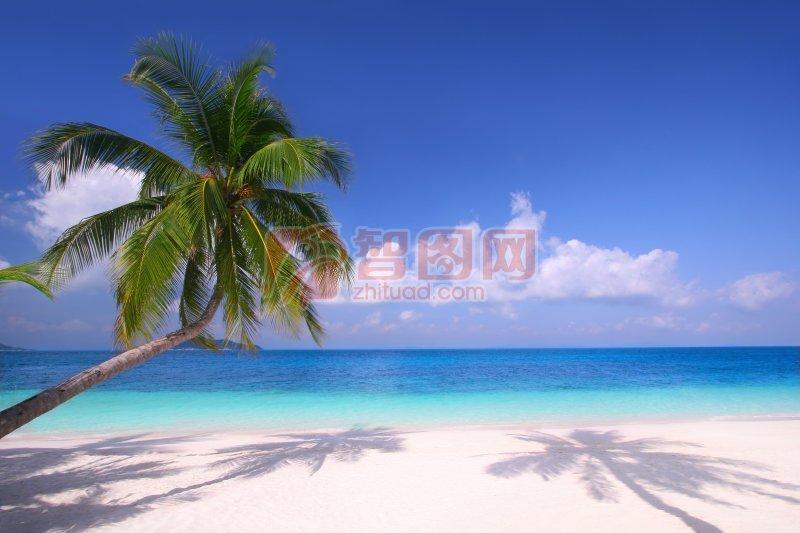 椰子樹攝影