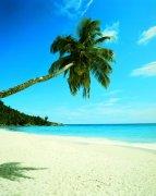 椰子樹元素