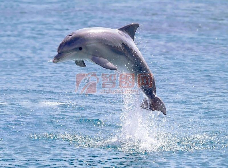 扣扣霸气头像动物海豚