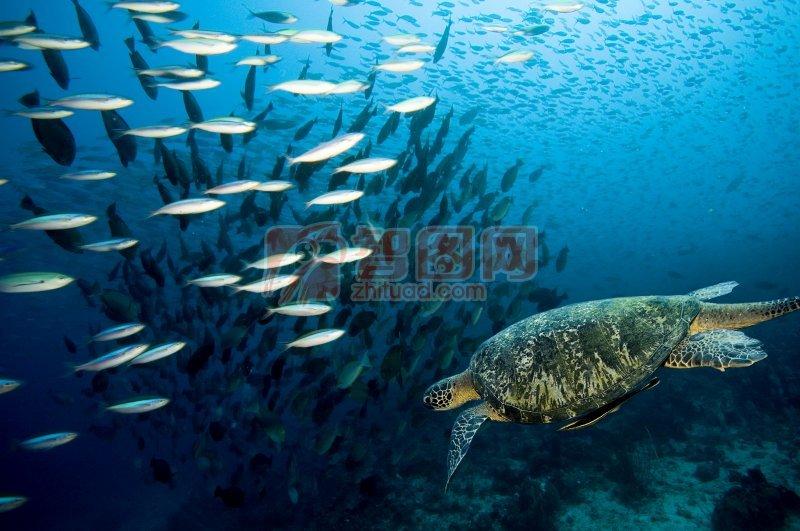 海洋生物元素