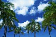 椰子樹攝影元素