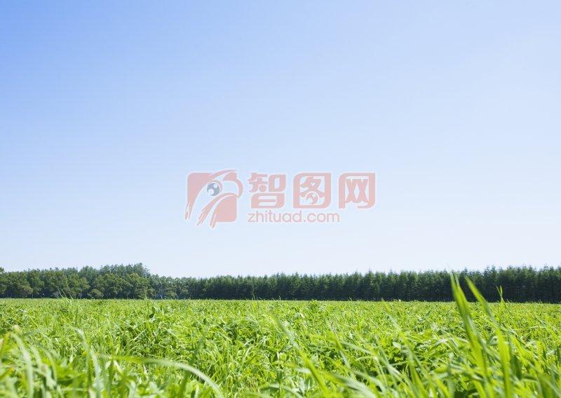遙遙的草原