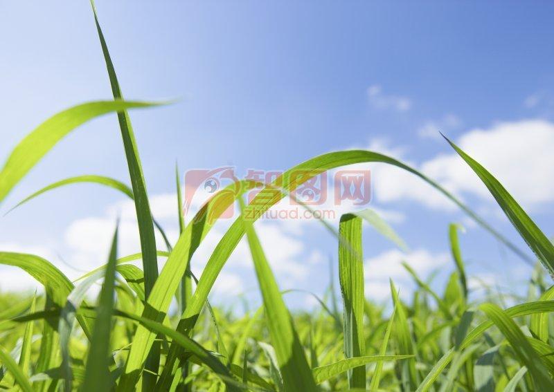 彎彎的草兒