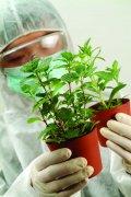 植物培育实验