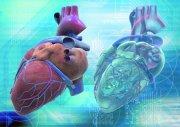 心脏研究摄影