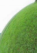 綠色攝影藝術