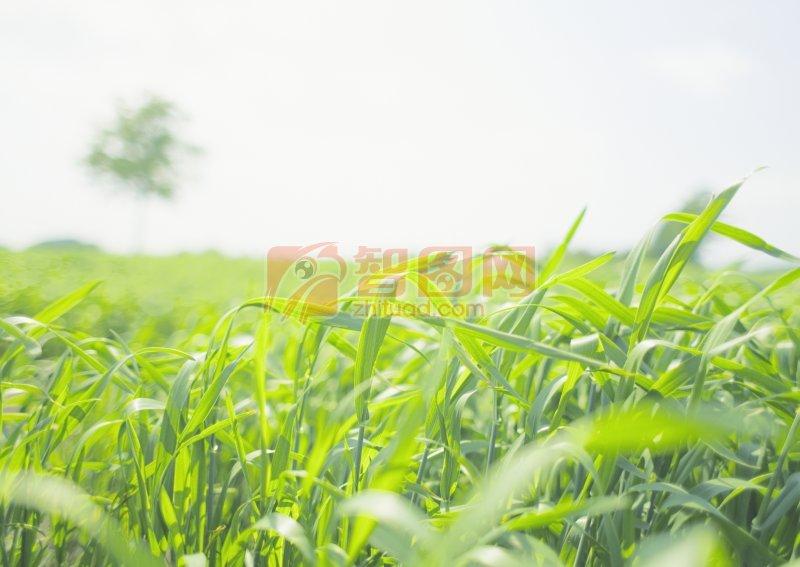 折彎的綠草
