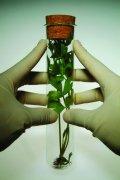 试管植物实验