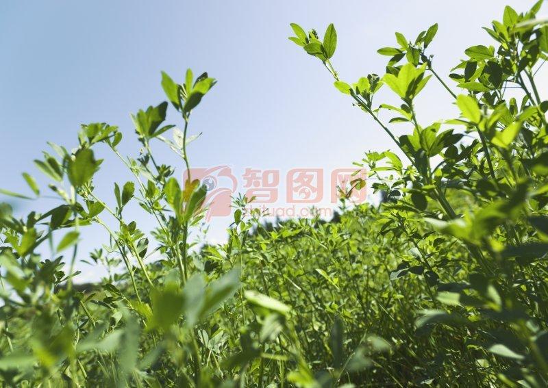 綠色草地攝影