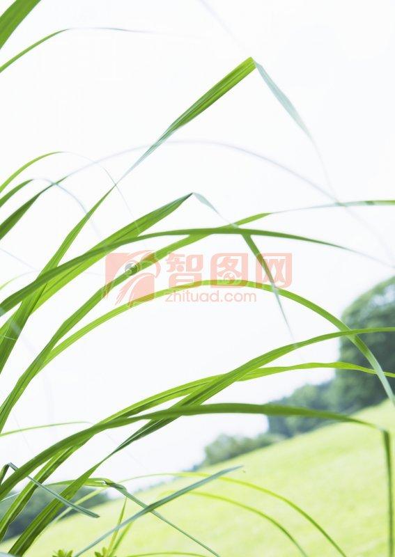 草葉攝影元素