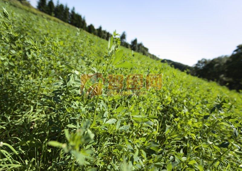 綠色草地攝影元素