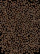 咖啡豆元素