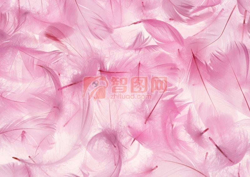 粉色羽毛元素