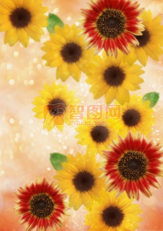 彩色鮮花元素