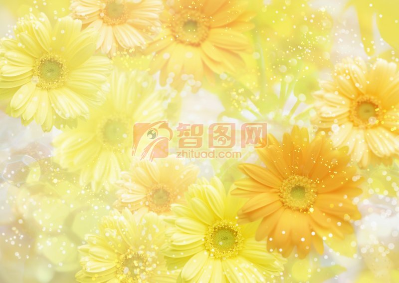 黃色背景花朵