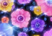 鮮花攝影元素