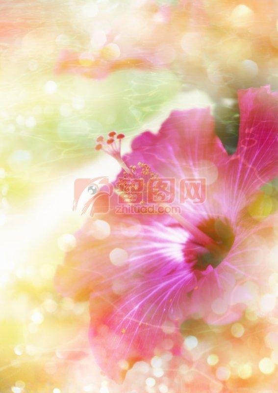 粉紅色鮮花元素