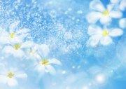 藍色背景鮮花攝影