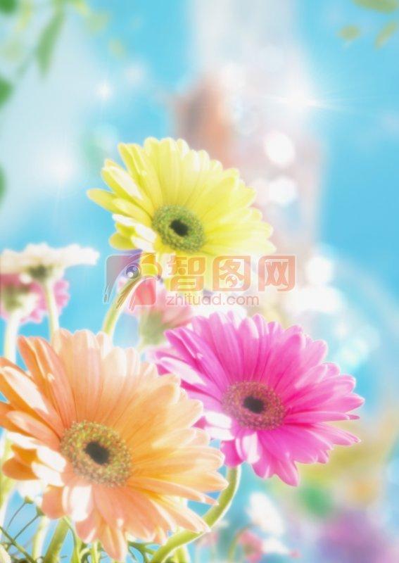彩色鮮花攝影