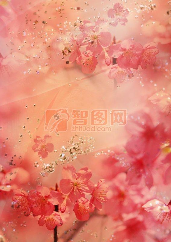 粉紅色鮮花攝影