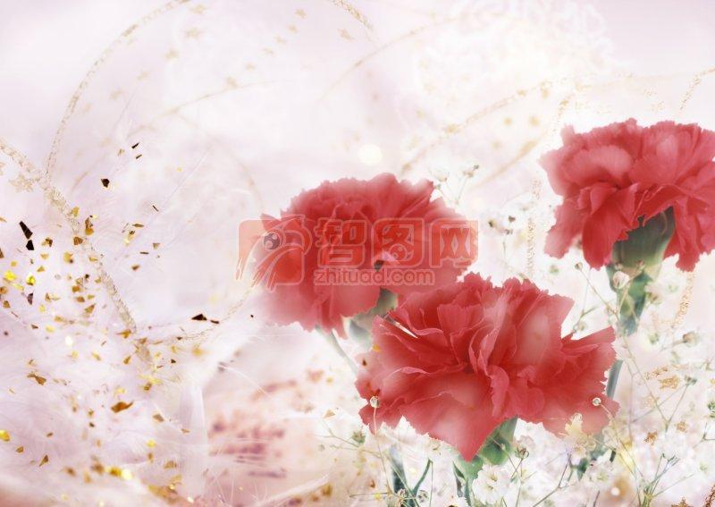 紅色鮮花攝影