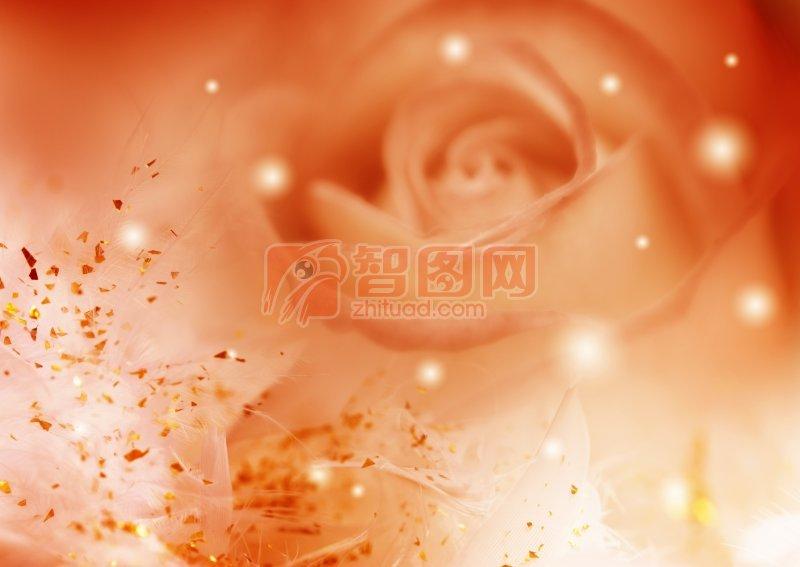 玫瑰花攝影