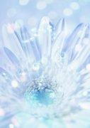 淺藍色鮮花攝影