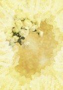 淺黃色鮮花攝影