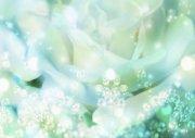 白色花瓣攝影