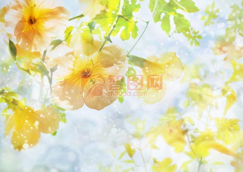 黃色花朵元素