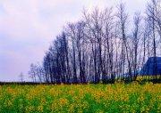 樹木攝影元素