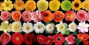 各種花朵分層文件