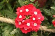 鲜花摄影素材
