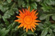 橘黄色鲜花摄影