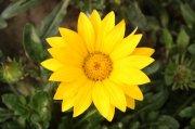 黄色鲜花元素