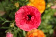 红色花瓣摄影