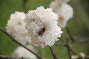 白色花瓣摄影