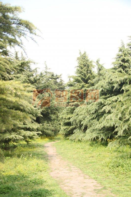 绿色树木元素