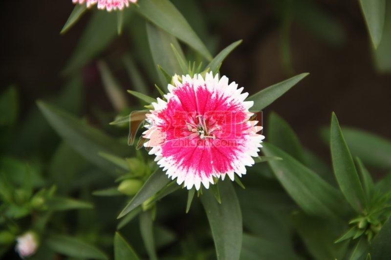 綠葉紅花攝影