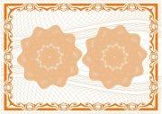 金橙果子色-許可證書紋