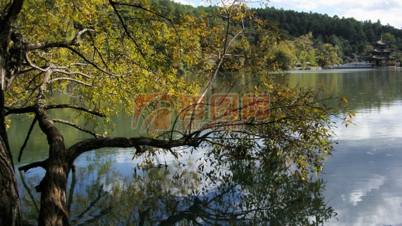 蓝天树木流水景图片大全
