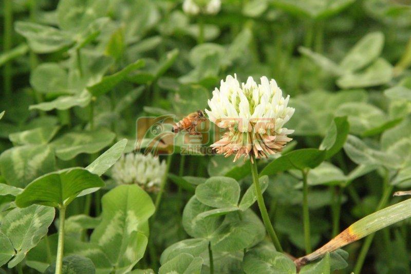 白色花朵素材3